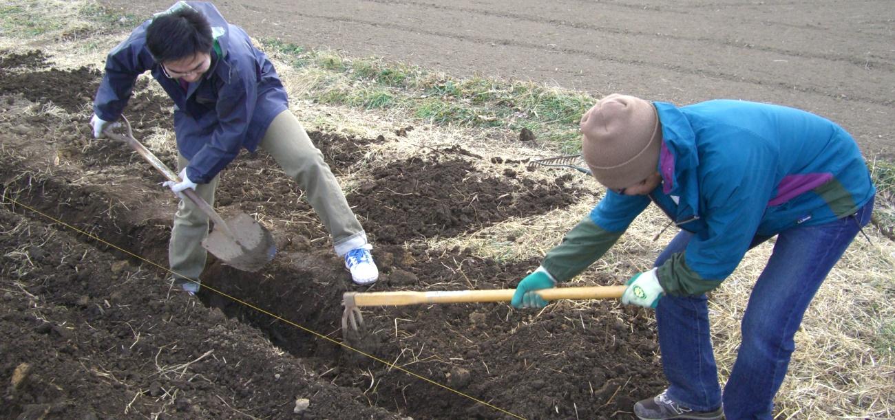 畑を耕しています