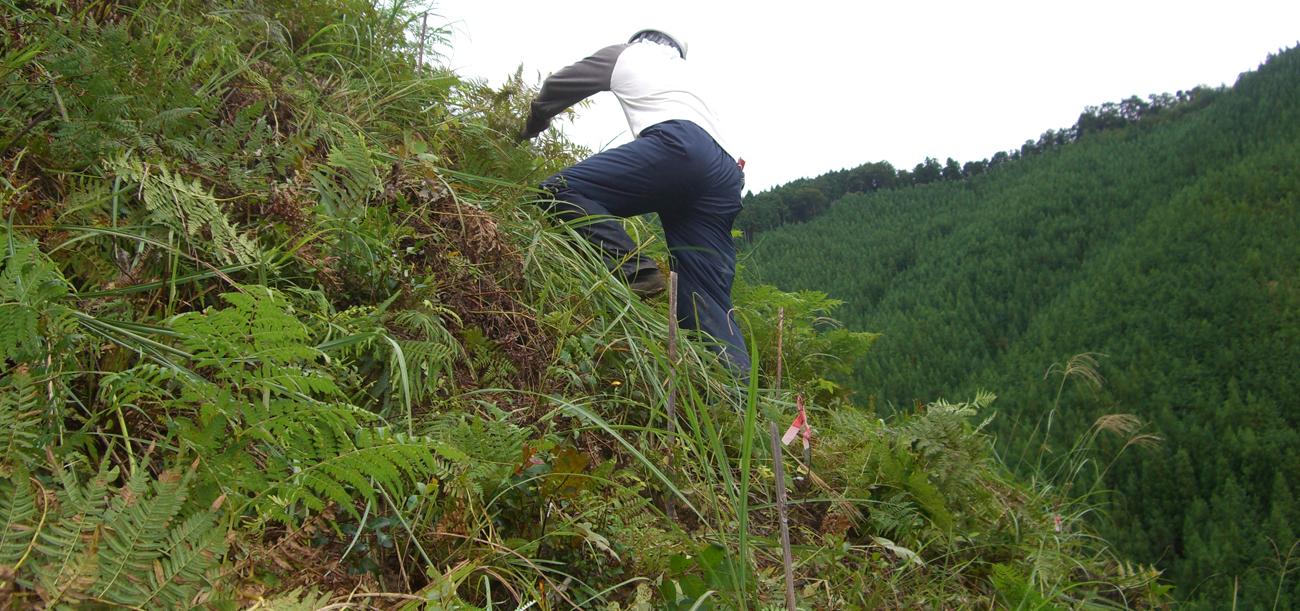 斜面の草も刈り取っていきます