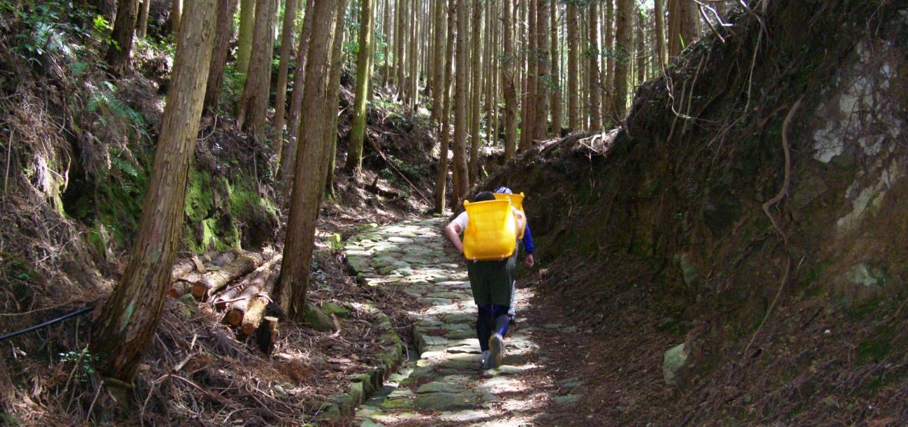 ひたすら林の中を土を運んでいきます