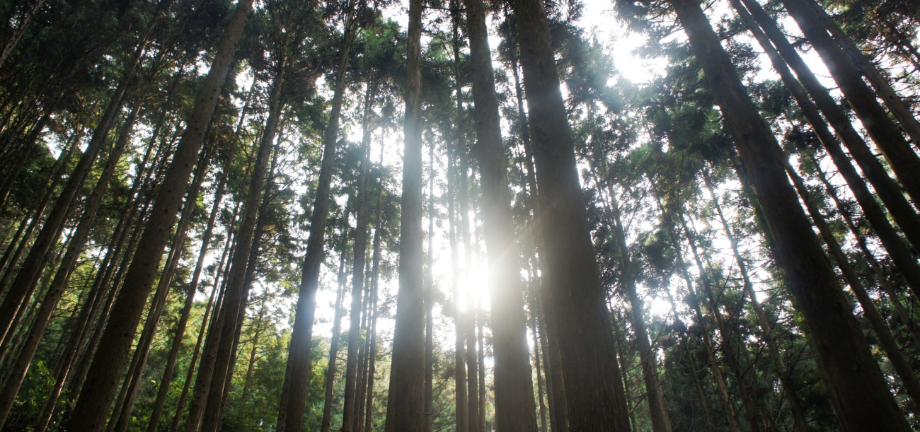 美しい森林で過酷な作業