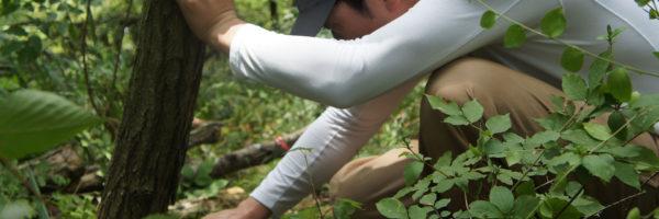 自然を守る、日本の自然を守る