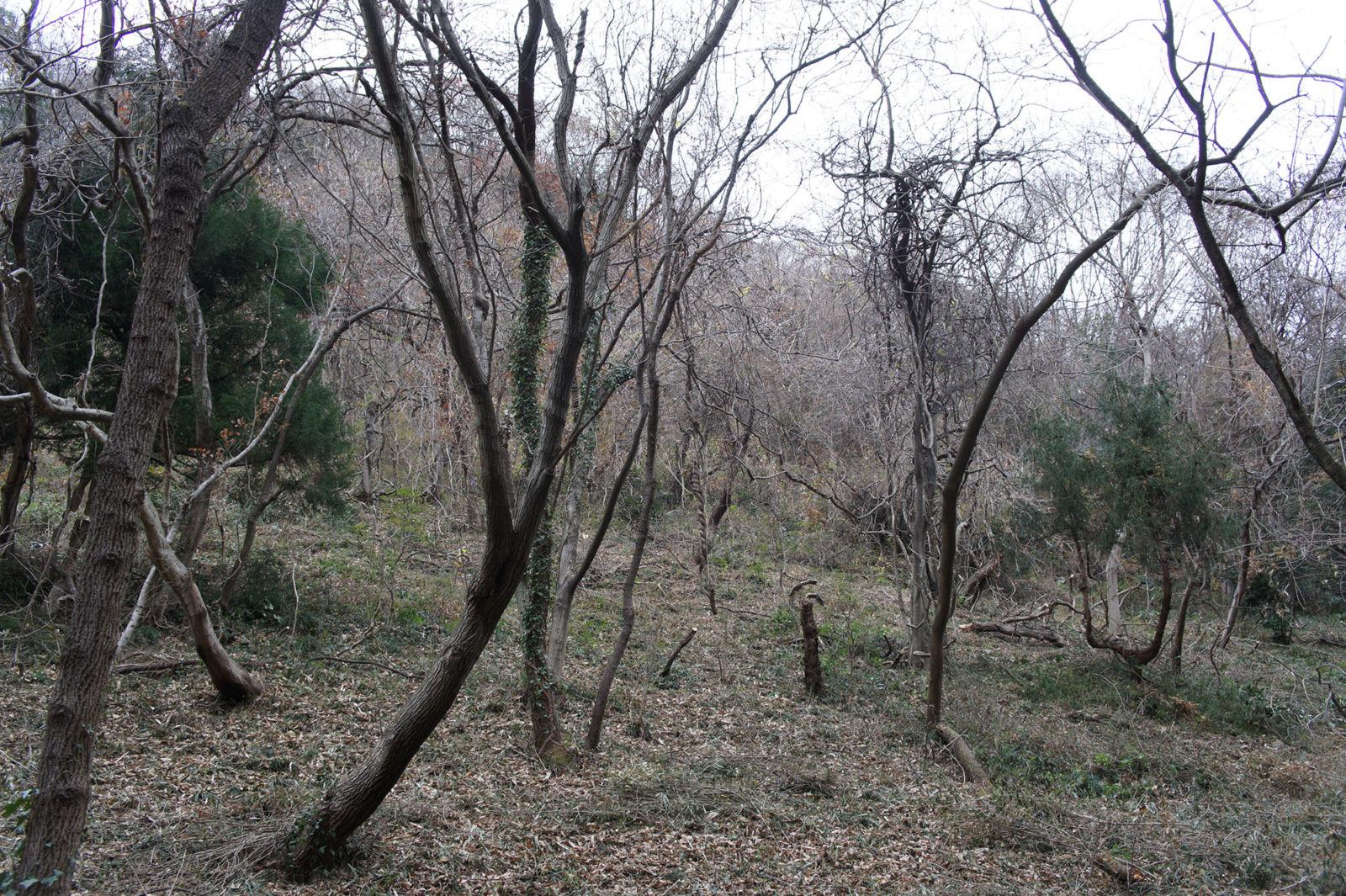 林の中での作業は続きます